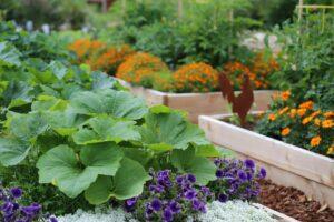 Mischkultur Aus Gemüse Und Blumen Im Hochbeet
