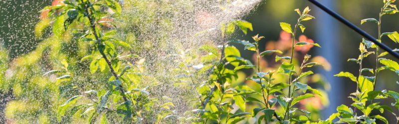 Sprühmittel Wird Im Garten Ausgebracht