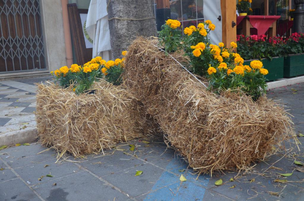 Gelbe Studentenblumen auf Stroh