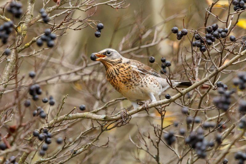 Vogelfreundlicher Baum Mit Vogel Zwischen Den Ästen
