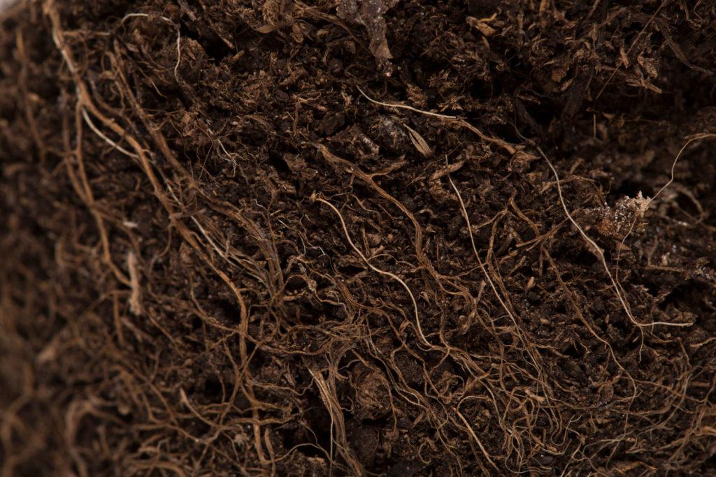 Wurzeln in der Erde im Boden