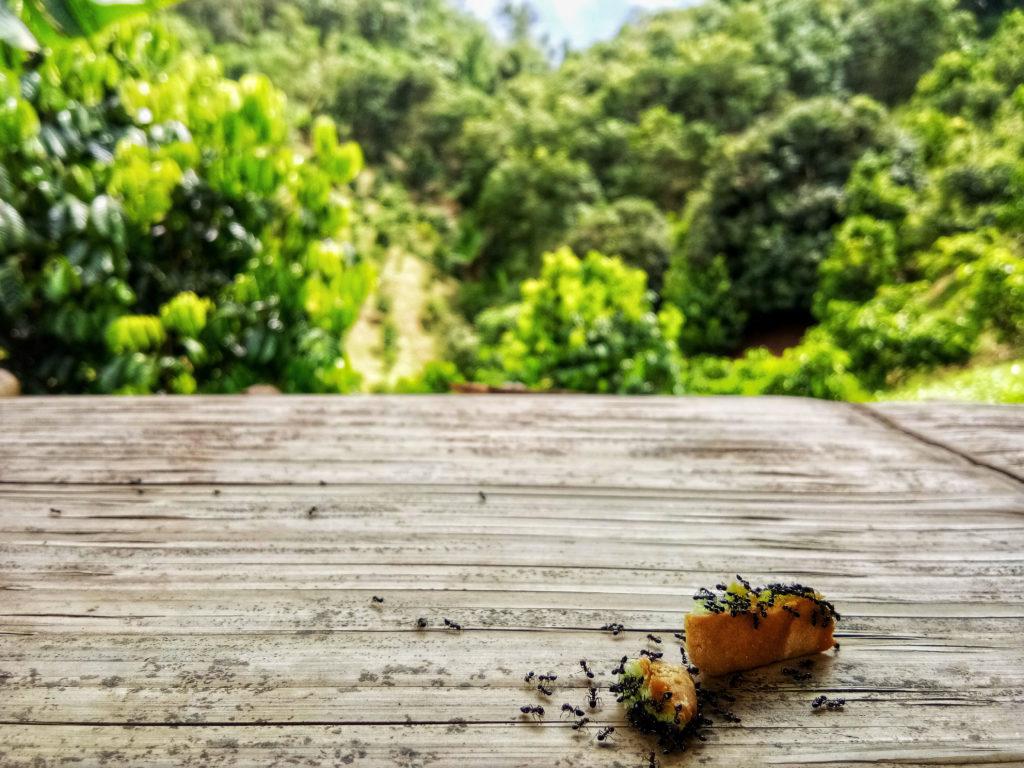 Ameisen am Brot im Garten