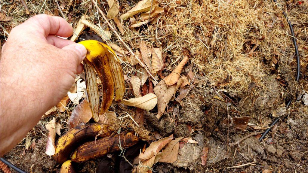 Bananenschale in Kompost werfend