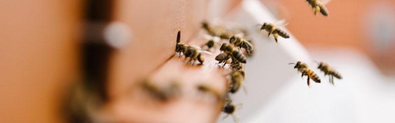 Bienen Fliegen Zuhause An
