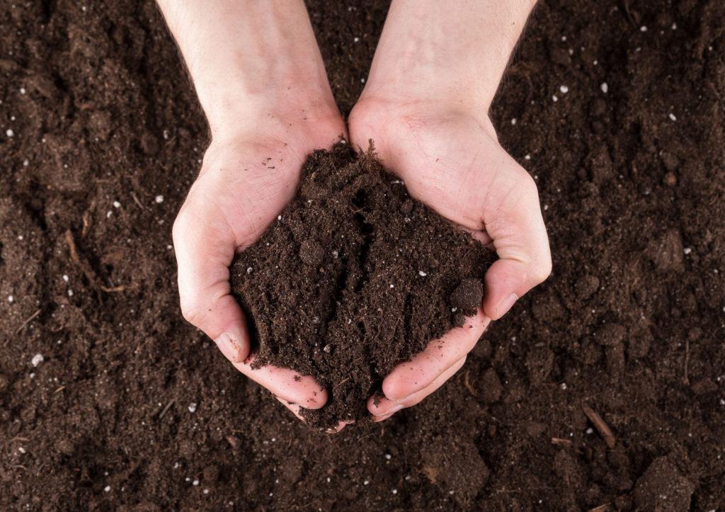 Komposterde in den Händen gehalten