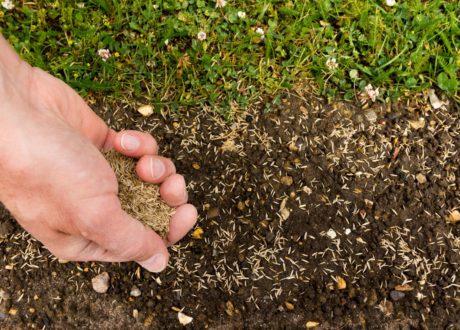 Rasen Von Hand Gesät