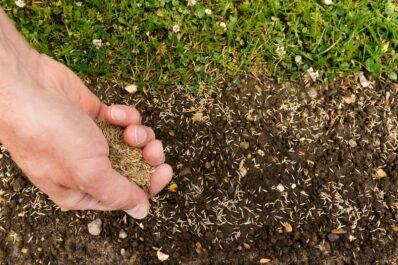 Rasen säen: Richtiger Zeitpunkt & Anleitung in 6 Schritten
