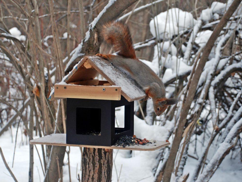 Eichhörnchen sitzt auf Futterhaus