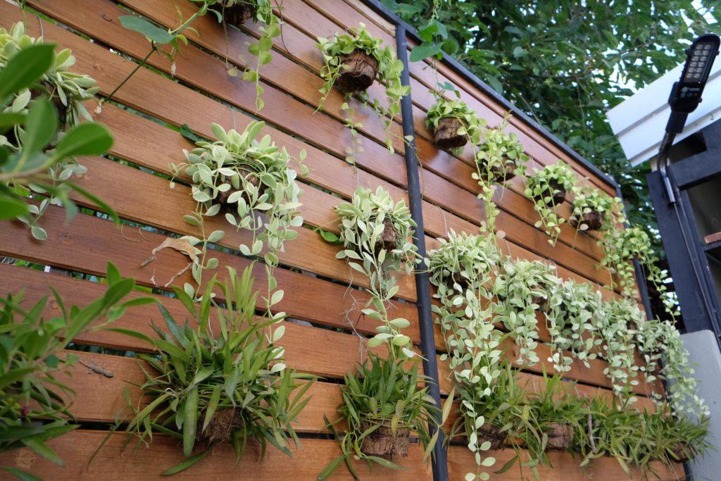 Vertikaler Garten an Sichtschutz