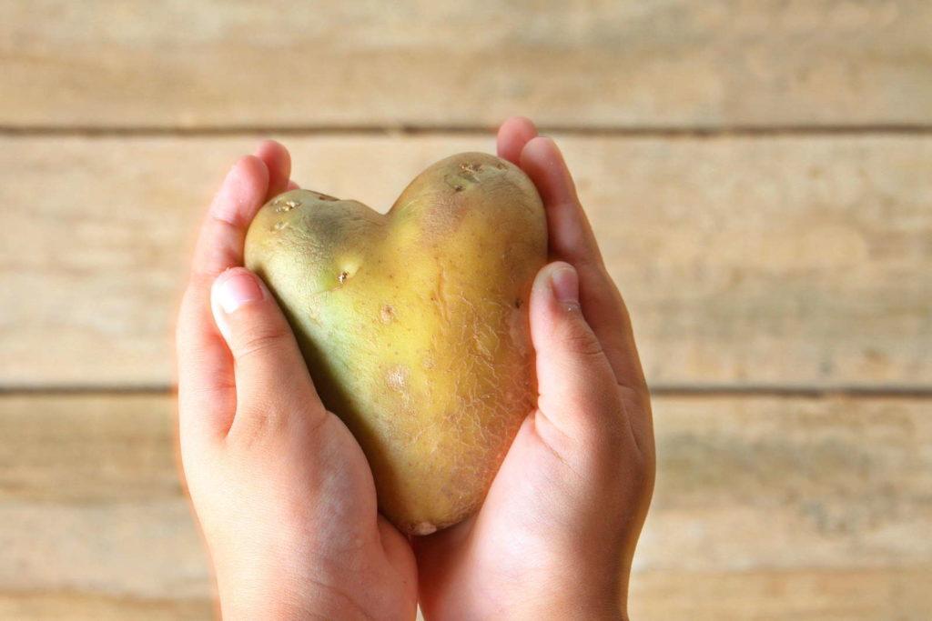 Krumme Kartoffel in Hand