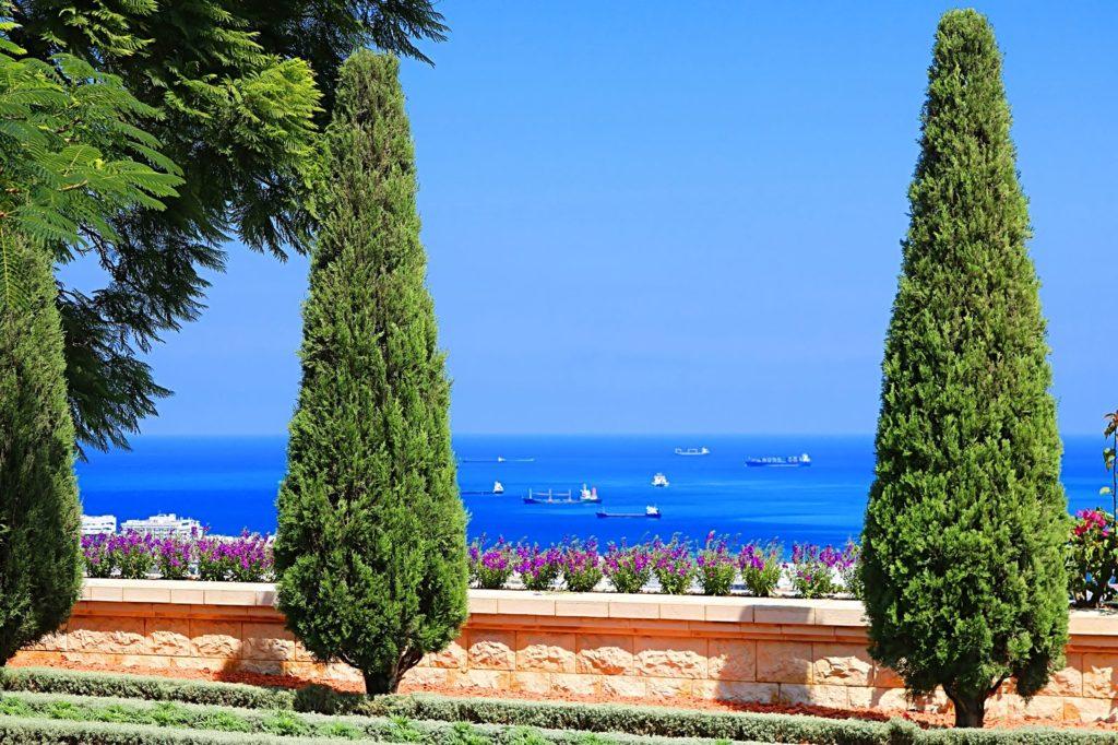 Zypresse im mediterranen Garten