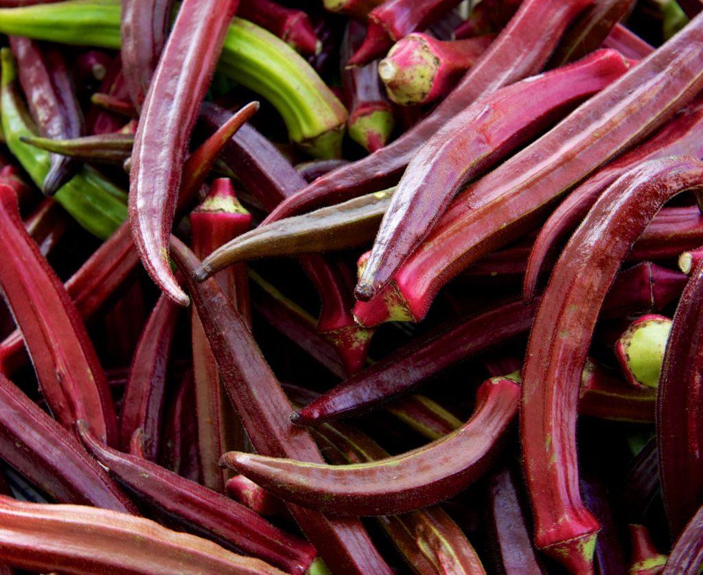 Frische rote Okra-Schoten