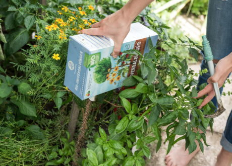 Organisches Düngergranulat Von Hand In Beet Gestreut