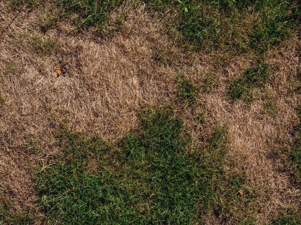 Trockener Rasen
