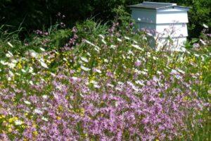 Wildblumen Wachsen Vor Bienenhaus