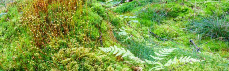 Verschiedene Moosarten Im Wald