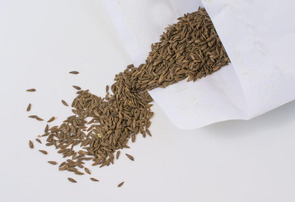 Eichblattsalat-Samen