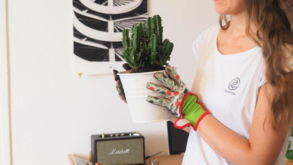 Kaktus im Topf von Frau gehalten