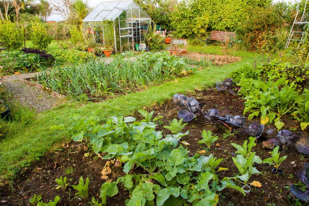 Gemüsegarten mit Gewächshaus
