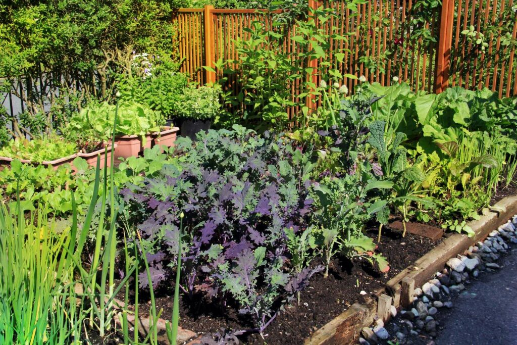 Gemüseanbau als Gartentrend 2021