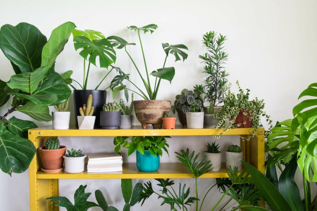 Indoor-Gärten als Trend 2021