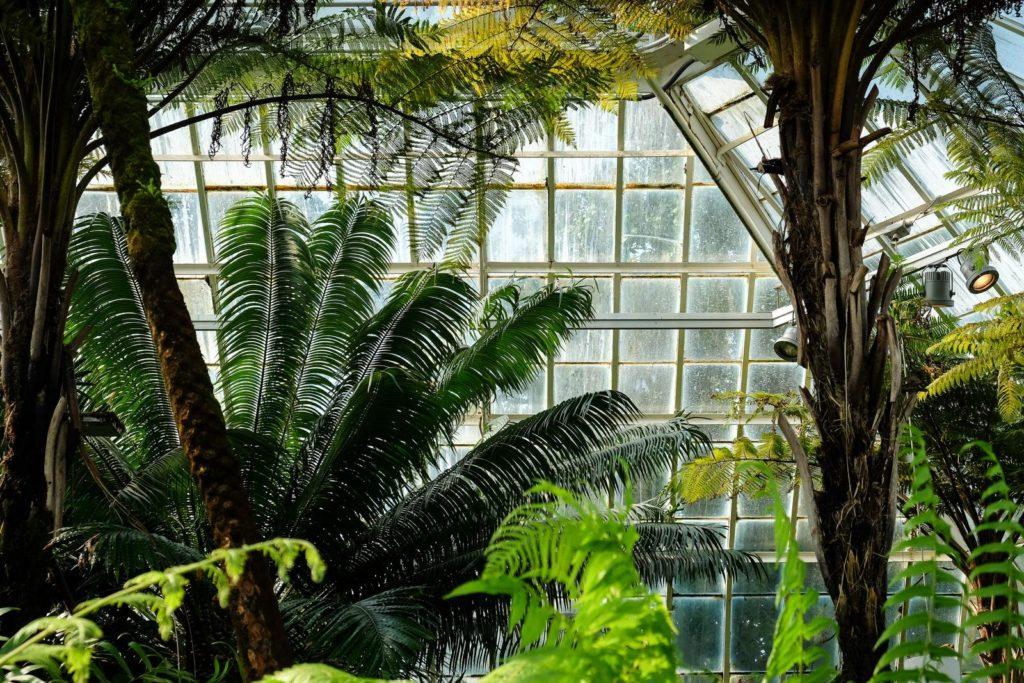 Palmen im Wintergarten