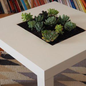 Tisch Mit Sukkulenten Bepflanzt