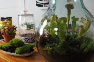 Flaschengarten_Fleischfressende Pflanzen_Floragard