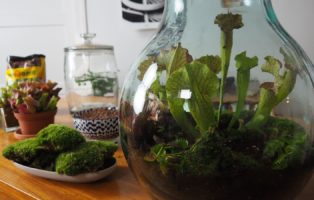 Flaschengarten Anlegen: Video-Anleitung & Geeignete Pflanzen