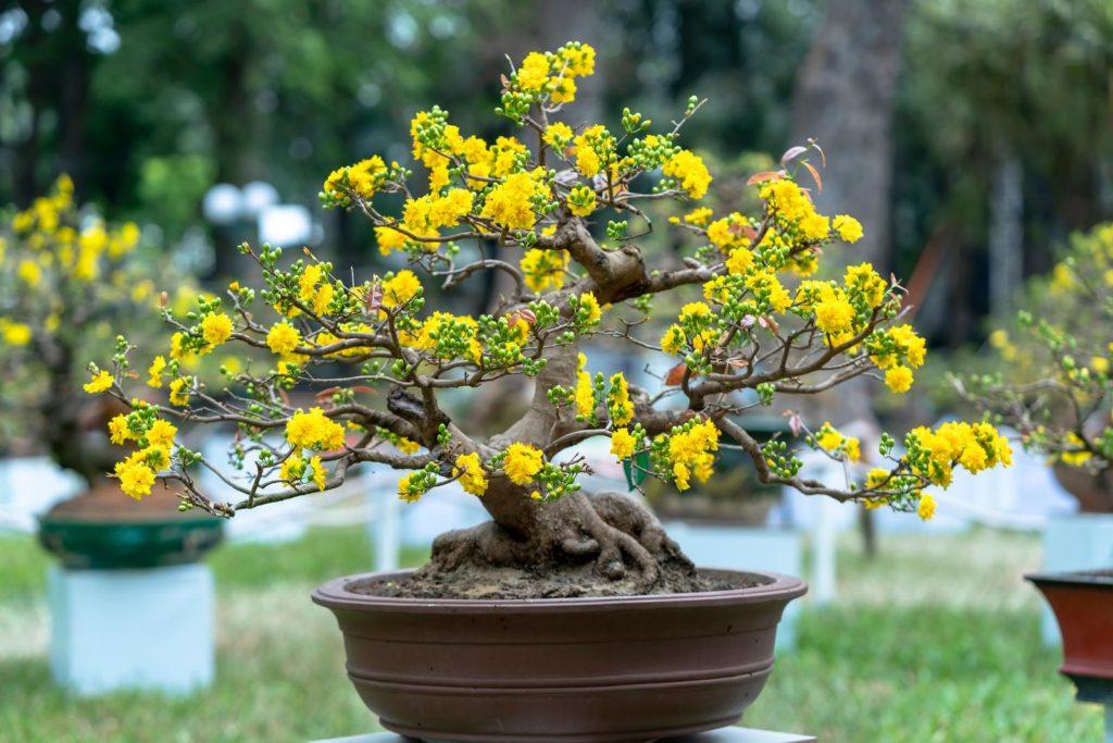 Bonsai mit gelben Blüten