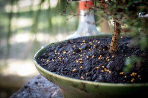 Dünger Auf Bonsai-Substrat