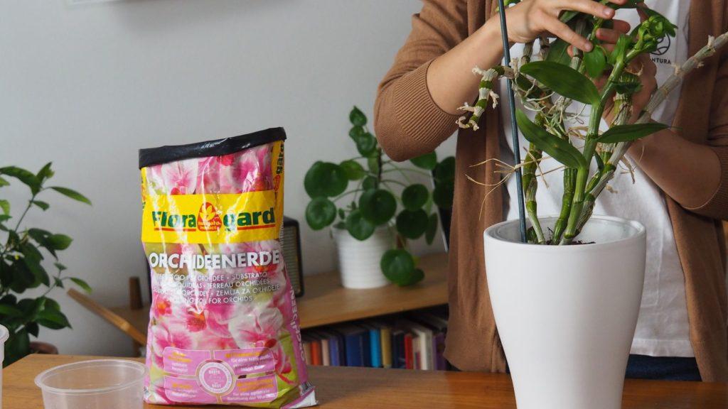Floragard Orchideenerde