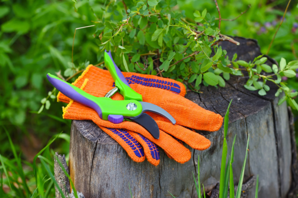 Gartenhandschuhe mit Schere im Garten liegend