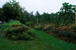 Hügelbeete In Garten