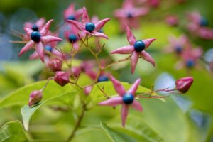Früchte An Losbaum