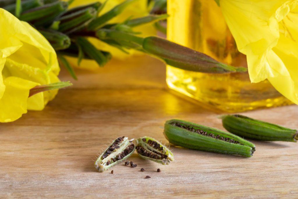 Nachtkerzen-Samen mit Blüten