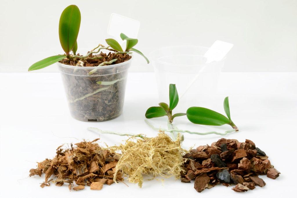 Orchideenerde selber mischen