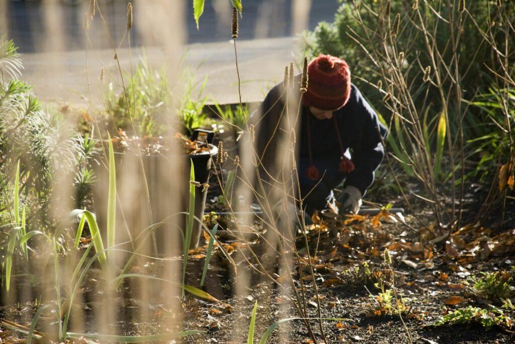 Gartenarbeit im Februar: Alles auf einen Blick!