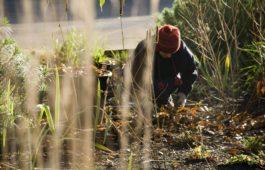 Gartenarbeit im Februar: Alles auf einen Blick