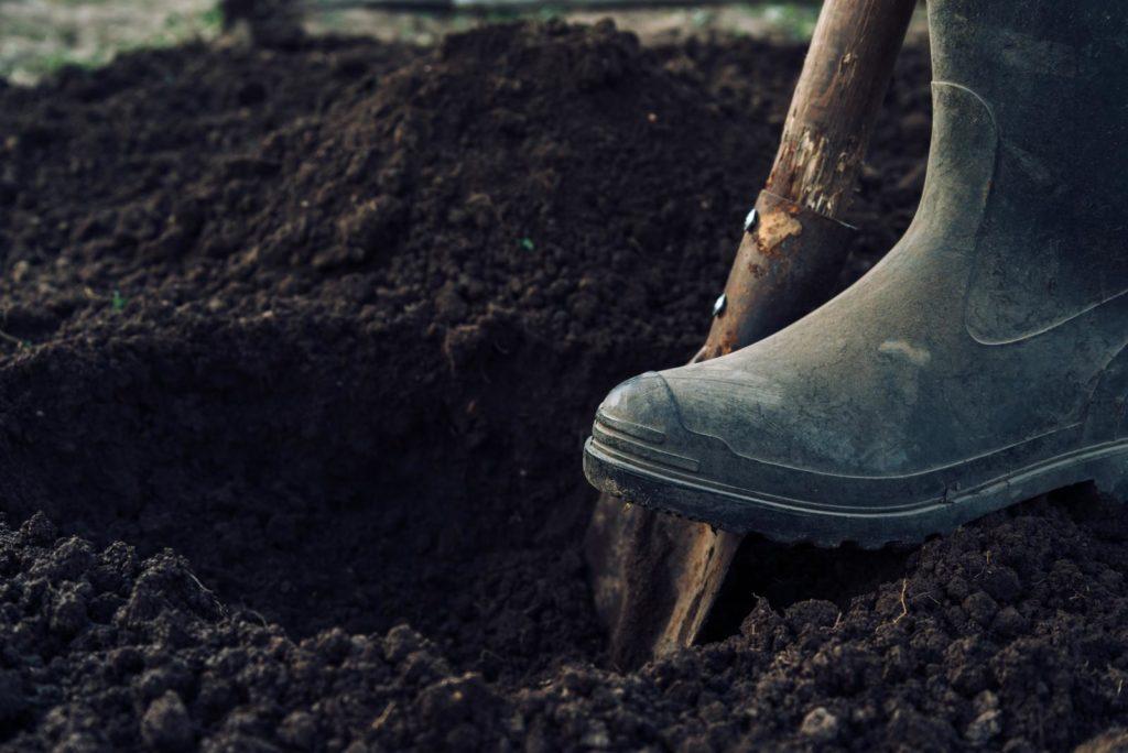 Pflanzloch ausgraben