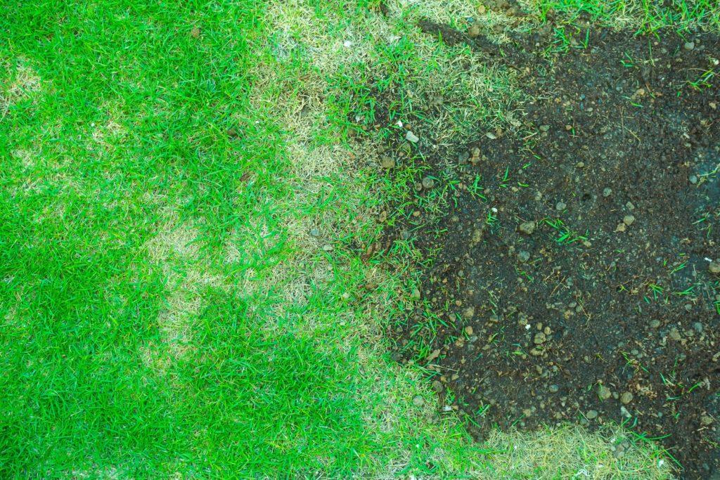 Rasen mit großer kahler Stelle