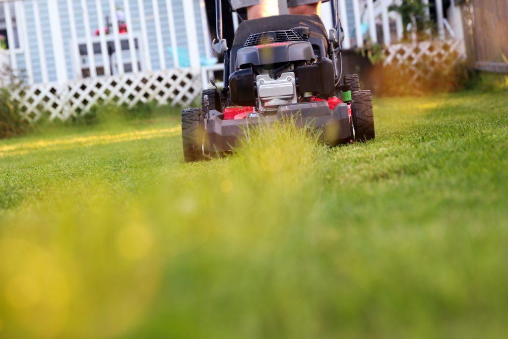 Rasenmäher den Rasen kürzend