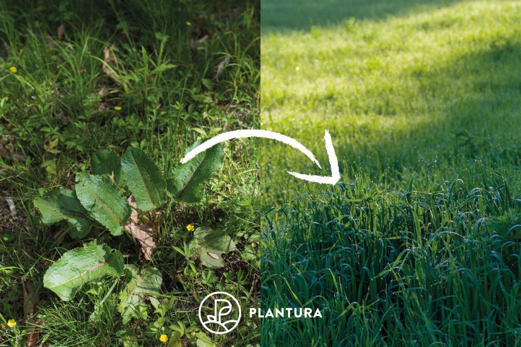 Rasenvergleich vor und nach Schattenrasen