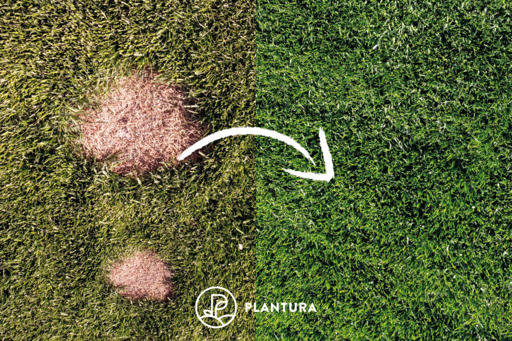 Rasenvergleich vor und nach Reperatur