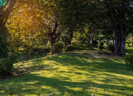 Schattige Rasenfläche Von Bäumen Umrandet