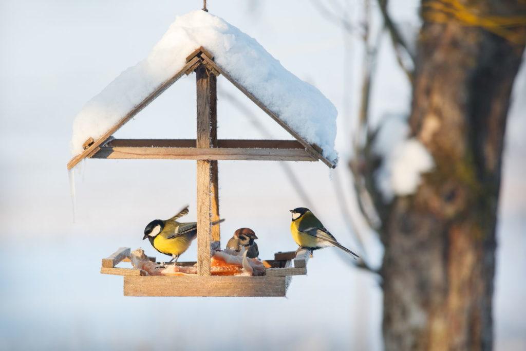 Vögel in Futterhaus im Winter sitzend