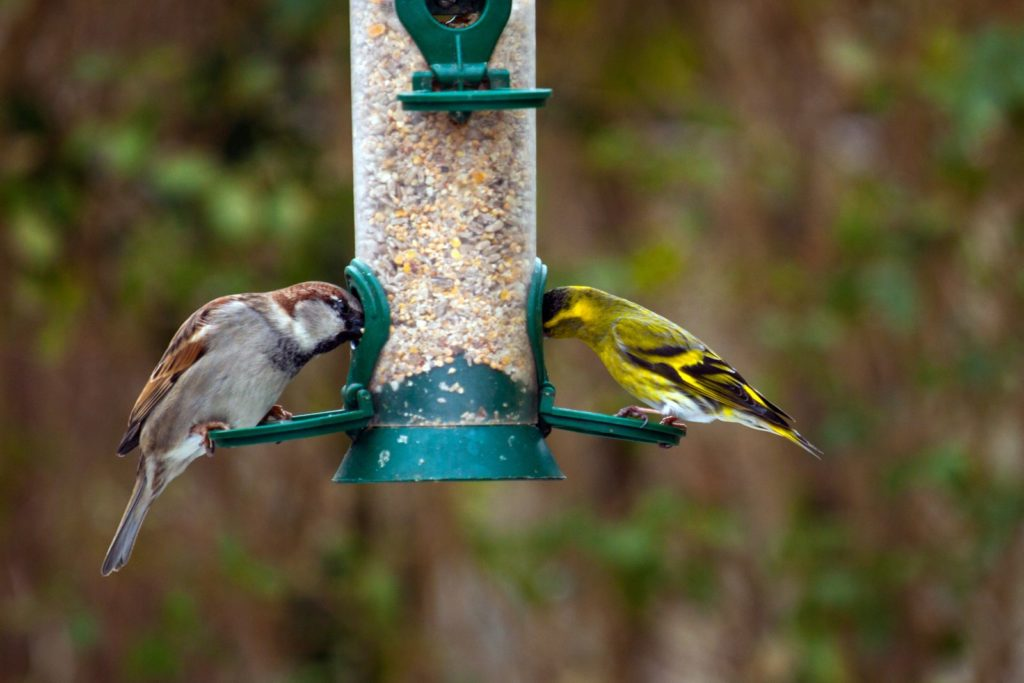 Vögel aus Futtersilo fressend
