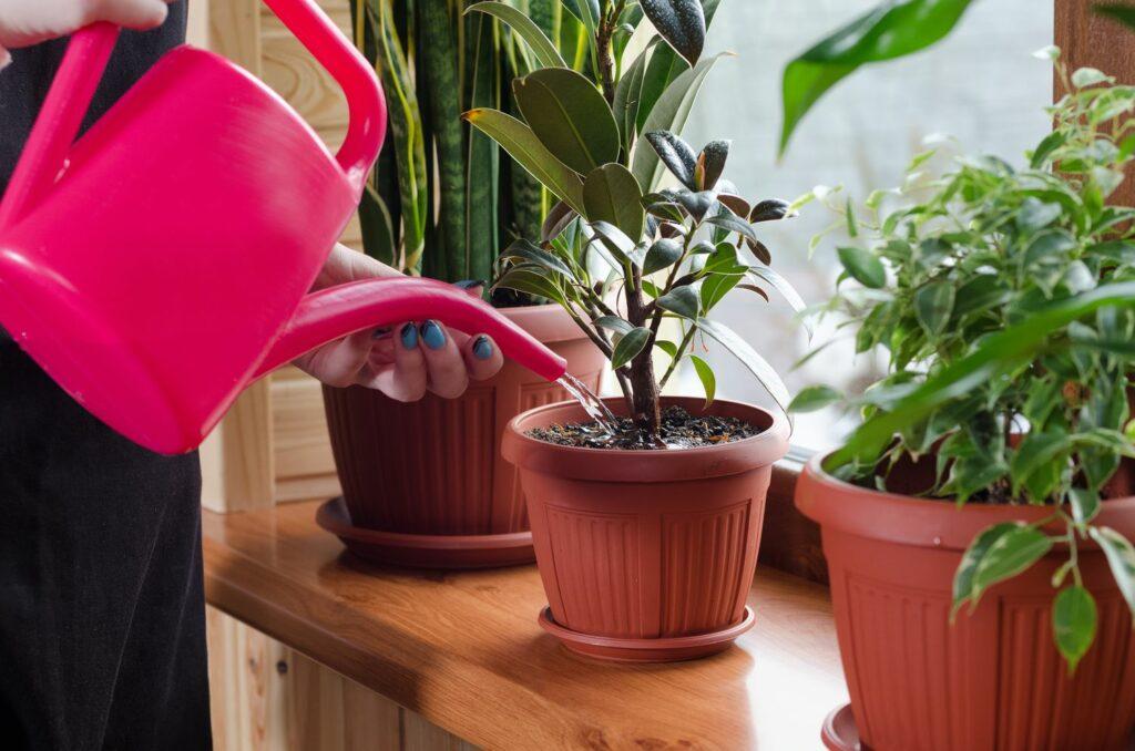 Pflanzen auf Fensterbrett werden gegossen