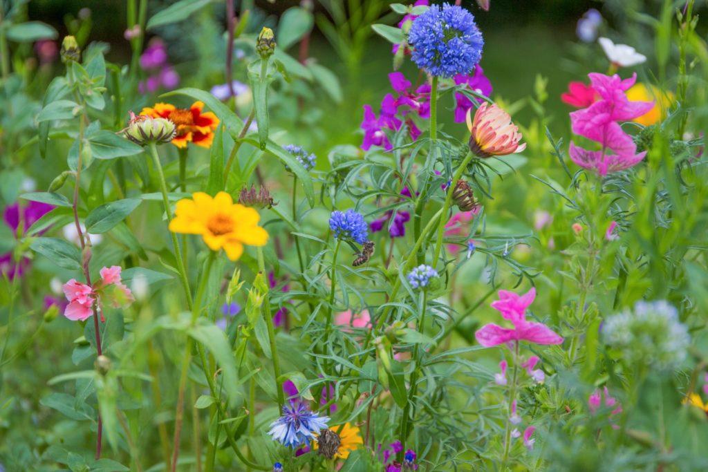Blumenwiese aus verschiedenen Blumen