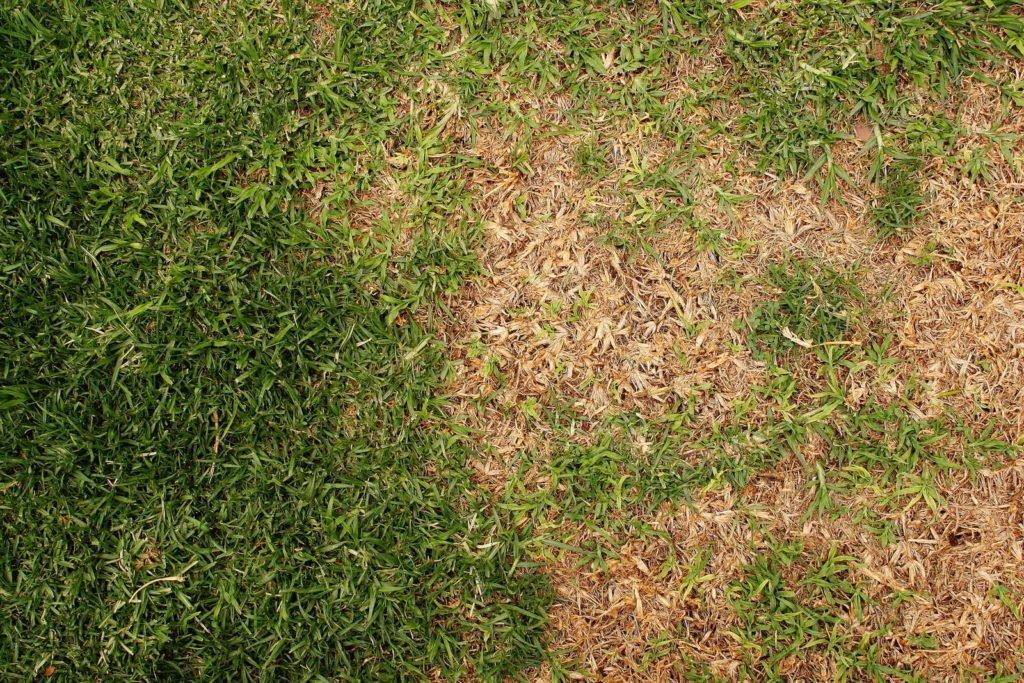Engerlinge Im Rasen Tipps Zur Bekampfung Plantura